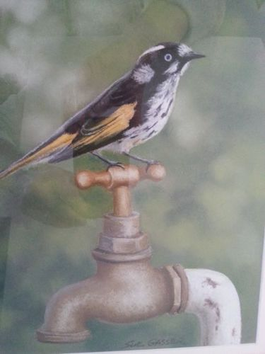 New Holland Honeyeater, $325, 20x25cm