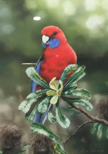 Crimson Rosella, $695, 36x26cm (re-sale)